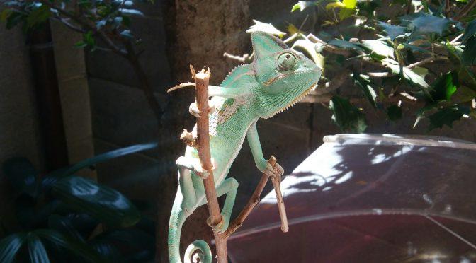 爬虫類と日光浴について