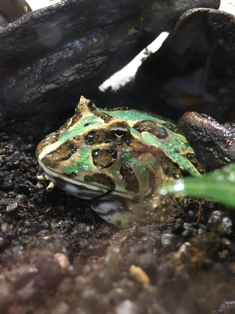 飼育 カエル カエルの飼い方 飼育